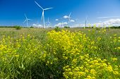 picture of generator  - Wind generators area with colza flowers in front - JPG