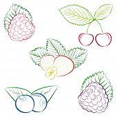 pic of blackberries  - Line drawing of strawberry - JPG