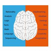 picture of right brain  - vector illustration of brain left and right sides - JPG