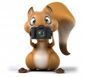 pic of megapixel  - Fun squirrel - JPG