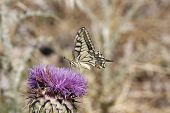 stock photo of butterfly  - Close up butterfly - JPG
