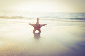 image of starfish  - Starfish on the sand on beautiful see - JPG