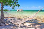 Hammock  Hanging Between Two Trees On Tropical Beach