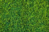 Short-haired lawn on a football field
