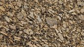 stock photo of feldspar  - 1x4ft Sample of Brazilian Giallo Fiorito Granite - JPG