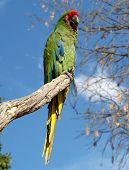 Green Macaw On A Tree