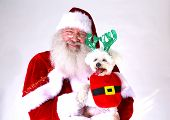 Santa Claus smiles as he holds a Smiling Bichon Frise dog. Isolated on white with room for your text poster