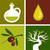 Quatro fundos de oliveiras