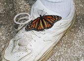 Gym Shoe With Butterfly