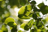 Nahaufnahme von grünen Blättern auf einem Baum