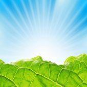 Hortaliças frescas com raios de sol, erguendo-se sobre o céu azul.
