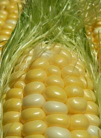 stock photo of corn cob close-up  - close - JPG