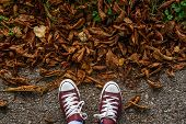 Fall, Autumn, Leaves, Legs And Sneakers. Conceptual Image Of Legs In Sneakers On The Autumn Leaves.  poster