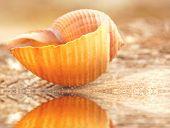 Pretty seashell next to tidepool at dusk