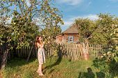 In A Rustic Garden Near The Old Apple Tree And An Abandoned Rural House Surrounded By A Palisade Fen poster