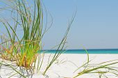 Sea grass on white sand in Pensacola, Florida