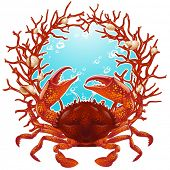 Vector crab and red coral frame
