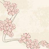 pic of cherry-blossom  - cherry blossom - JPG