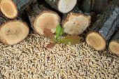 Oak Pellets In Front Of Pile Of Oak Wood poster