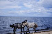 The Horses Standing Next To Each Other The Shoreline On A Summer Day. poster