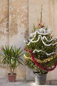 Christmas tree and palm tree