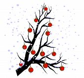 winter twig - red globes