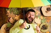 Man Bearded Lay On Wooden Background With Leaves Top View. Rainy Weather Forecast Concept. Fall Atmo poster
