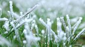 frozen green grass