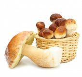 Boletus Edulis mushrooms in straw basket isolated on white background.