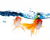 gold fish jumping over slash blue water