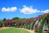 Brisbane Garden