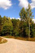 Weg door een groen bos met bomen