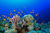 Underwater Corals, Sponge and Fish on Red Sea reef