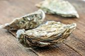 stock photo of crustaceans  - oysters on wood table closeup - JPG