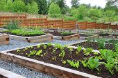 stock photo of cultivation  - Community vegetable garden boxes - JPG
