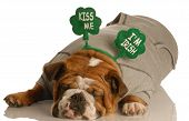 St Patricks Bulldog Laying Down Sleeping