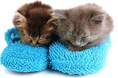 Small kittens sits on house slippers isolated on white