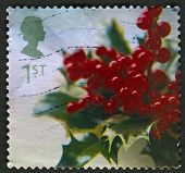 UK - CIRCA 2002: A stamp printed in UK shows image of the Holly, circa 2002.