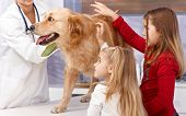 foto of veterinary clinic  - Little sisters and dog at veterinary surgeon - JPG