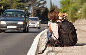 Viajante de carona com o cachorro na estrada