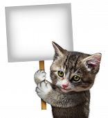 image of baby cat  - Cat holding a blank card sign as a cute kitten feline with a smiling happy expression supporting and communicating a message pertaining to pet care on an isolated white background - JPG