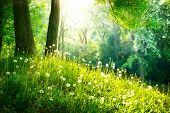 Spring Nature. Beautiful Landscape. Park with Green Grass and Trees. Tranquil Background poster