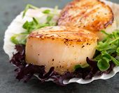 Studio closeup of seared scallops, garnished with pea shoots and served on a bed of green and purple
