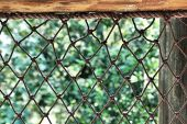 Netting Background