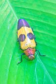 Insect From Thailand