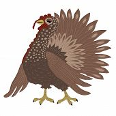 image of turkey-cock  - Turkey cock on white background in vector - JPG