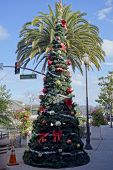 Christmas Tree in SoCal