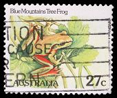AUSTRALIA - CIRCA 1981: stamp printed by Australia, shows Blue Mountains tree frog, circa 1981
