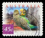 AUSTRALIA - CIRCA 2001: a stamp printed in the Australia shows Budgerigar, Melopsittacus Undulatus,