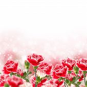 stock photo of carnations  - Postcard with fresh flowers carnations and place for your text - JPG